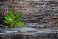 Plant on Wood Background - PhotoDune Item for Sale