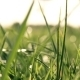 Green Backlit Grass - VideoHive Item for Sale