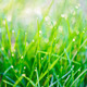Dew drops on green grass - PhotoDune Item for Sale