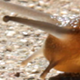 Snail Moving - VideoHive Item for Sale