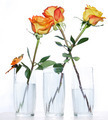Three roses in glasses - PhotoDune Item for Sale