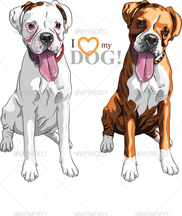 Vector Sketch of Dog Boxer breed  - Animals Characters