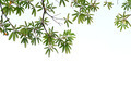 Green leaves on white background - PhotoDune Item for Sale