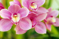 Orchids - PhotoDune Item for Sale