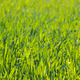 Perfect green grass background - PhotoDune Item for Sale