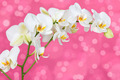 Orchid on the pink background - PhotoDune Item for Sale