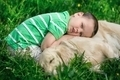 Child and golden retriever - PhotoDune Item for Sale