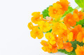 yellow and orange flower - PhotoDune Item for Sale