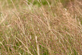 Dry grass background - PhotoDune Item for Sale