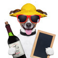 summer dog and wine bottle - PhotoDune Item for Sale