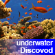 Colorful Fish on Vibrant Coral Reef 39 - VideoHive Item for Sale