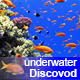 Colorful Fish on Vibrant Coral Reef 51 - VideoHive Item for Sale
