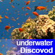 Colorful Fish on Vibrant Coral Reef 57 - VideoHive Item for Sale