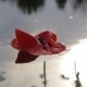 Poppy Flower Floating On Water 04 - VideoHive Item for Sale