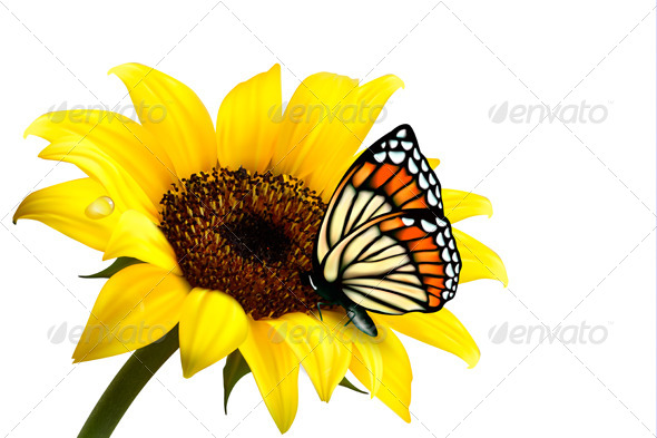 GraphicRiver Nature Summer Sunflower with Butterfly Vector 4903807