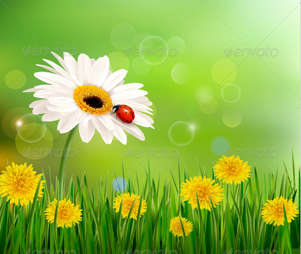GraphicRiver Nature Background with Ladybug on White Flower 4903881
