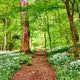 English woodland scene with wild garlic - PhotoDune Item for Sale