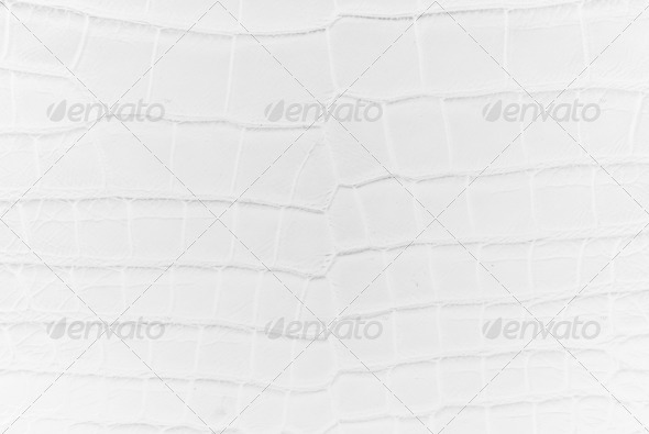 White Crocodile Bone skin texture. - Stock Photo - Images