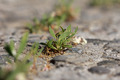 grass on concrete in nature. macro - PhotoDune Item for Sale