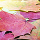 colored autumn leaves background - PhotoDune Item for Sale