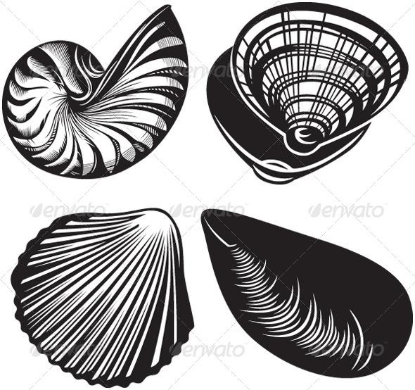 GraphicRiver Seashells 4943115