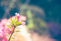 Pink Flower with Bokeh - PhotoDune Item for Sale