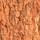 Patterns of tree bark - PhotoDune Item for Sale