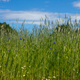 Beautiful landscape of meadow with blue sky - PhotoDune Item for Sale