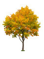 Autumn tree isolated - PhotoDune Item for Sale