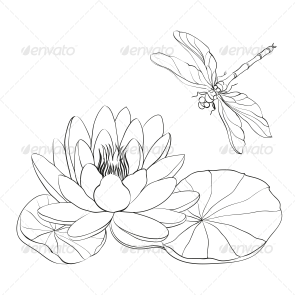 GraphicRiver Water Lily and Dragonfly 4961146