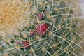 Macro shot of a cactus - PhotoDune Item for Sale