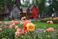 Roses in the Park and Houses - PhotoDune Item for Sale