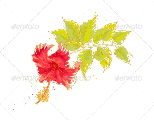 GraphicRiver Hibiscus Flower Isolated on White Background 4986006