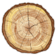Wood Log - GraphicRiver Item for Sale