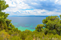 Beautiful blue sea behind conifers - PhotoDune Item for Sale