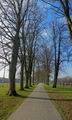 Tree avenue path vertical panorama, The Groe Builth Wells Wales UK. - PhotoDune Item for Sale