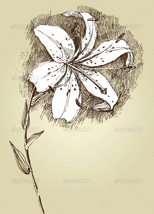 GraphicRiver Lilly Flower 5049811