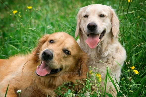 Portrait of two young beauty dogs - Stock Photo - Images