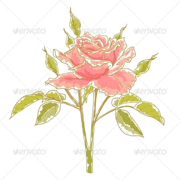 GraphicRiver Pink Rose 5060873