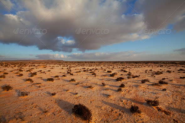 Desert in Western Sahara - Stock Photo - Images