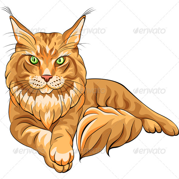 GraphicRiver Fluffy Maine Coon Cat 5082437