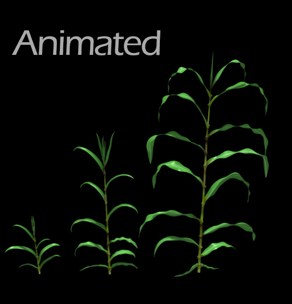 3DOcean Corn Plant Growth Animated 5118053