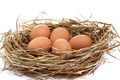 Wonderful  chicken eggs in a  hay. - PhotoDune Item for Sale