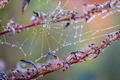 Water drops on a spider web, Macro - PhotoDune Item for Sale