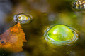 Green Bubble, Swampy water, Macro - PhotoDune Item for Sale