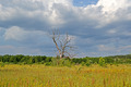 Vintage Tree In The Meadow Before Thunderstorm, Blue Sky  - PhotoDune Item for Sale