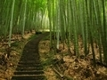Green Bamboo Forest - PhotoDune Item for Sale