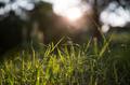 Grass - PhotoDune Item for Sale