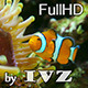 Clown fish - VideoHive Item for Sale
