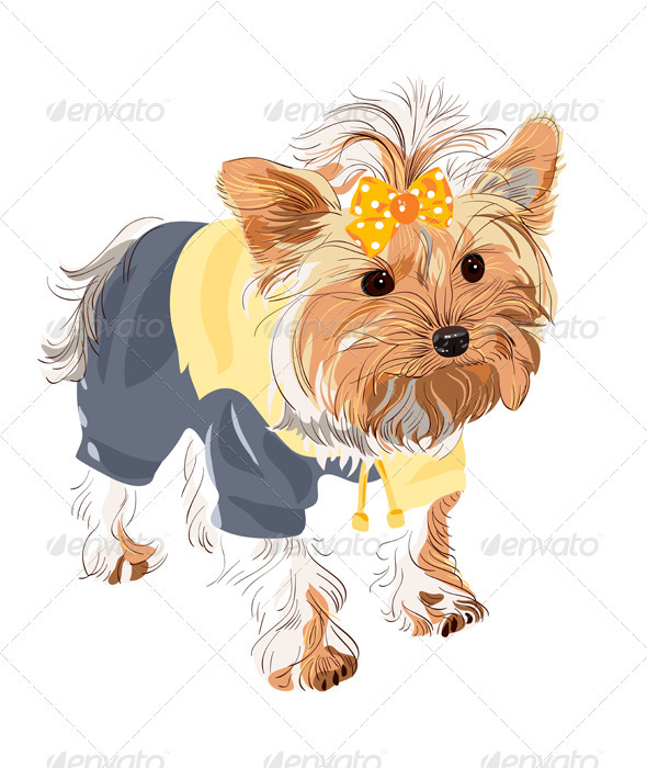 Pedigreed dog Yorkshire terrier - Animals Characters